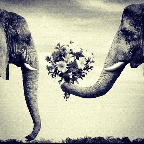 elephant-lovins