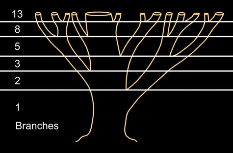 fibonacci-branches-numbers-tree