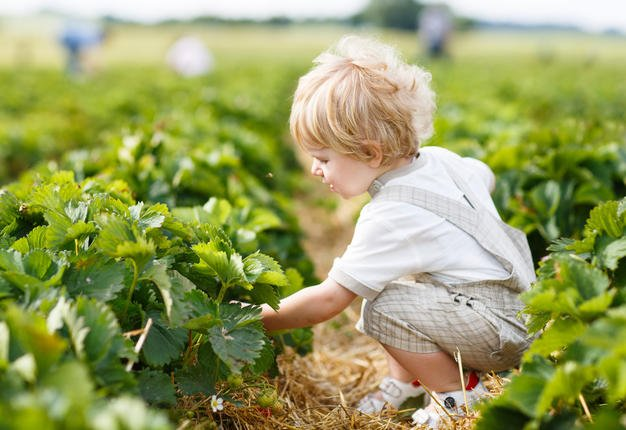 25 Ways to Teach Your Kids About Sustainability