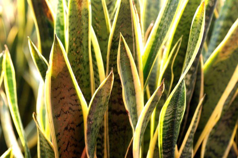 8 Bedroom Plants to Improve your Sleep