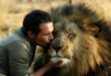 man kissing lion