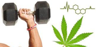 cbd workout