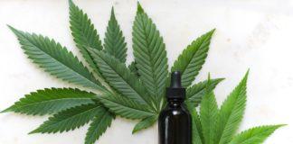 cbd hemp cannabis leaf