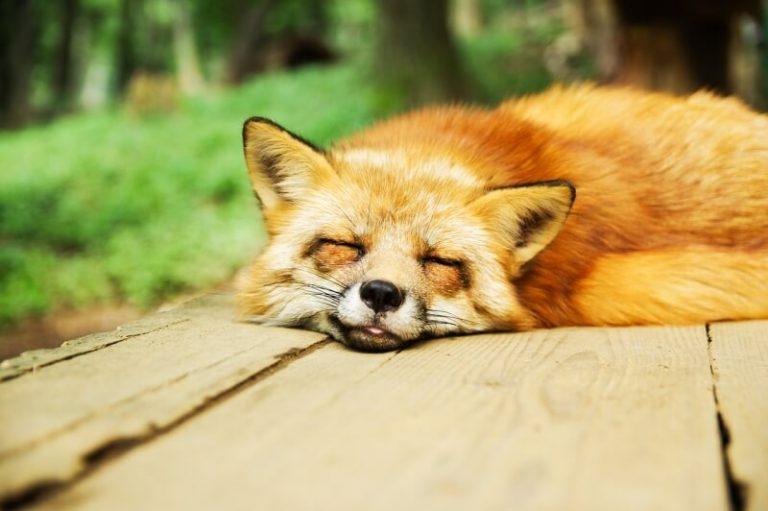 8 Benefits of a Good Night's Sleep